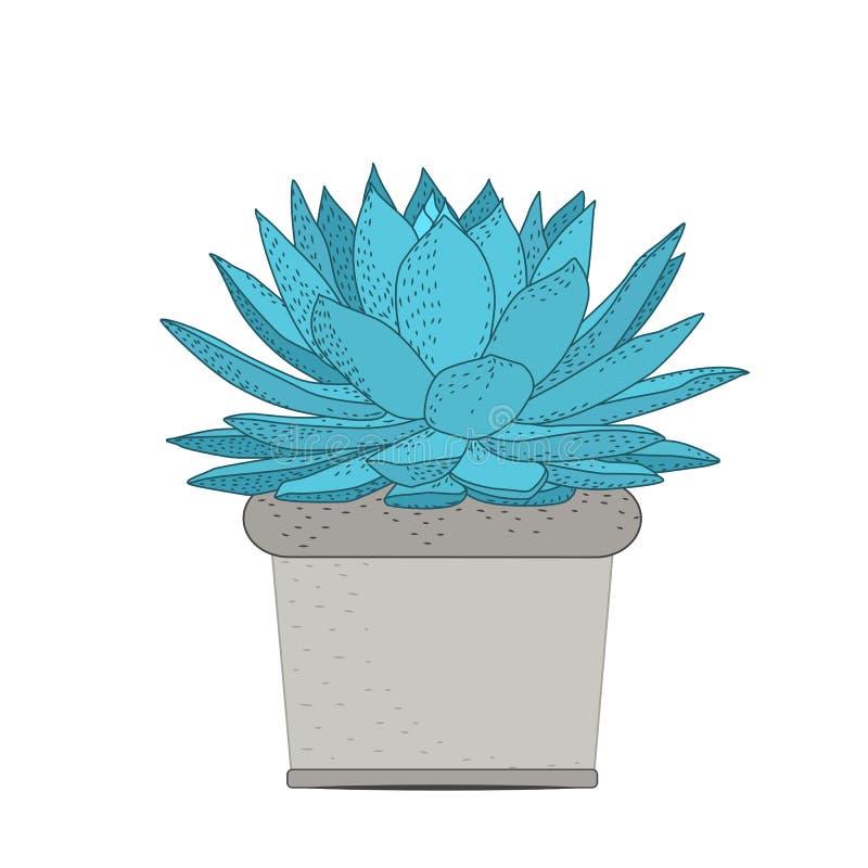 Οι Succulent εγκαταστάσεις στο αγροτικό δοχείο απομόνωσαν διακοσμητικό διανυσματική απεικόνιση