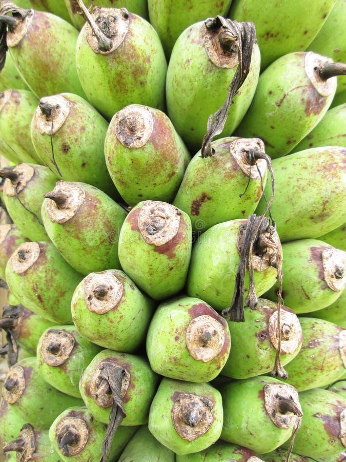 Οι Unripe μπανάνες στη ζούγκλα κλείνουν επάνω στοκ εικόνα