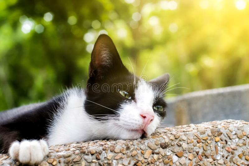 Οκνηρή γάτα στοκ φωτογραφία
