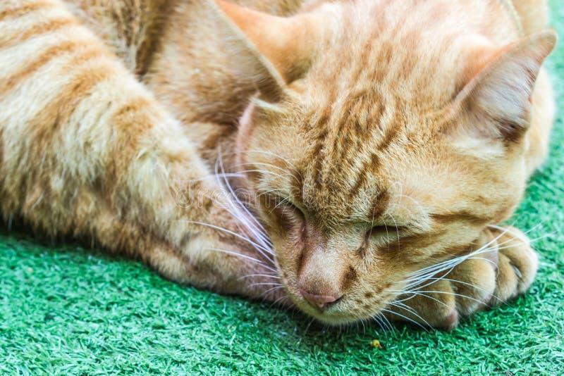 Οκνηρή πορτοκαλιά γάτα στοκ εικόνα