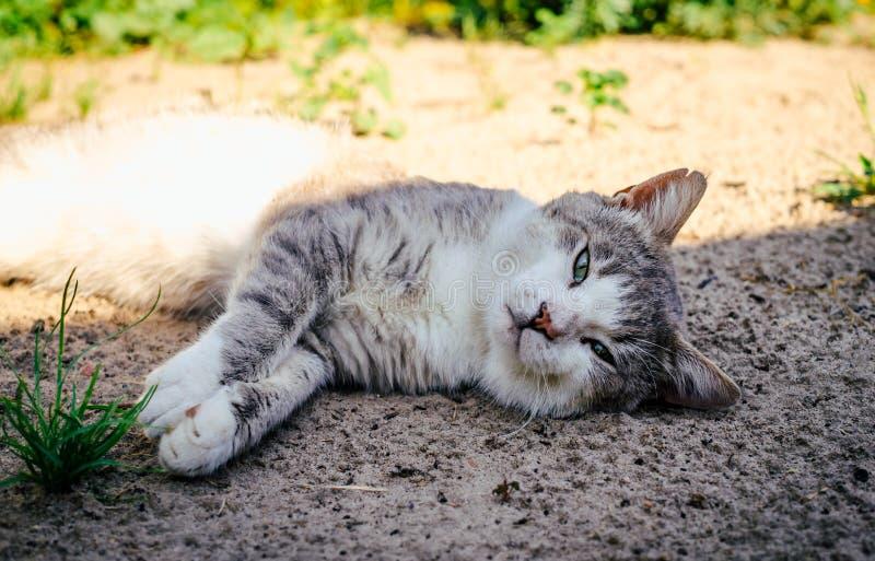 Οκνηροί ύπνοι γατών στον κήπο στοκ εικόνες