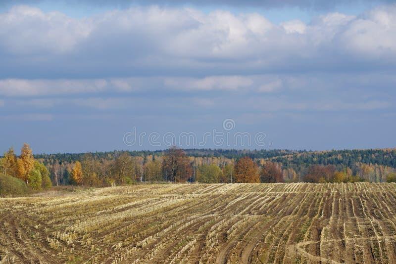 Οκτώβριος χρώματα φθινοπώρου της φύσης Συμπιεσμένος τομέας του καλαμποκιού στοκ φωτογραφία