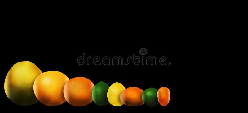 Οκτώ δημοφιλή εσπεριδοειδή απεικονίζονται αριστερά στο δικαίωμα: pomelo, γκρέιπφρουτ, πορτοκάλι, ασβέστης, λεμόνι, tangerine, βασ απεικόνιση αποθεμάτων
