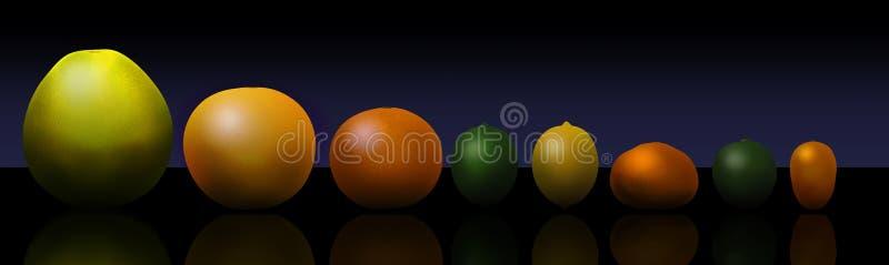 Οκτώ δημοφιλή εσπεριδοειδή απεικονίζονται αριστερά στο δικαίωμα: pomelo, γκρέιπφρουτ, πορτοκάλι, ασβέστης, λεμόνι, tangerine, βασ διανυσματική απεικόνιση