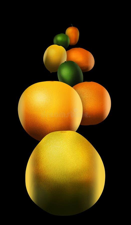 Οκτώ δημοφιλή εσπεριδοειδή απεικονίζονται Αυτοί περιλαμβάνουν: pomelo απεικόνιση αποθεμάτων