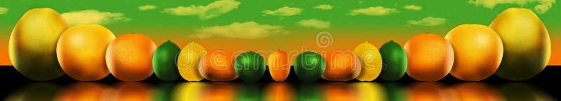 Οκτώ δημοφιλή εσπεριδοειδή απεικονίζονται Αυτοί περιλαμβάνουν: pomelo διανυσματική απεικόνιση