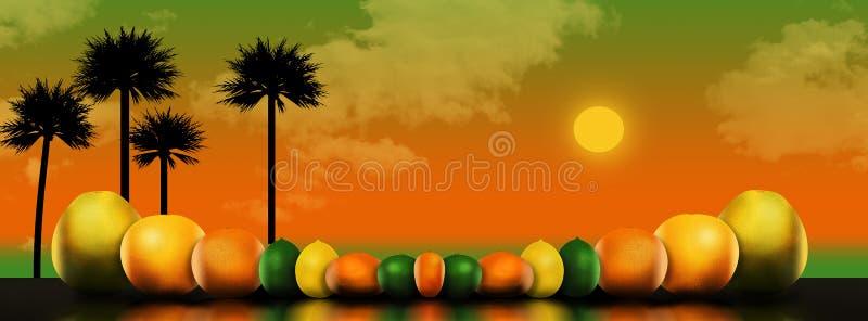 Οκτώ δημοφιλή εσπεριδοειδή απεικονίζονται σε μια απεικόνιση Αυτοί περιλαμβάνουν: pomelo, γκρέιπφρουτ, πορτοκάλι, ασβέστης, λεμόνι απεικόνιση αποθεμάτων