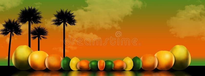 Οκτώ δημοφιλή εσπεριδοειδή απεικονίζονται σε μια απεικόνιση Αυτοί περιλαμβάνουν: pomelo, γκρέιπφρουτ, πορτοκάλι, ασβέστης, λεμόνι ελεύθερη απεικόνιση δικαιώματος