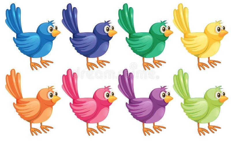 Οκτώ ζωηρόχρωμα πουλιά ελεύθερη απεικόνιση δικαιώματος