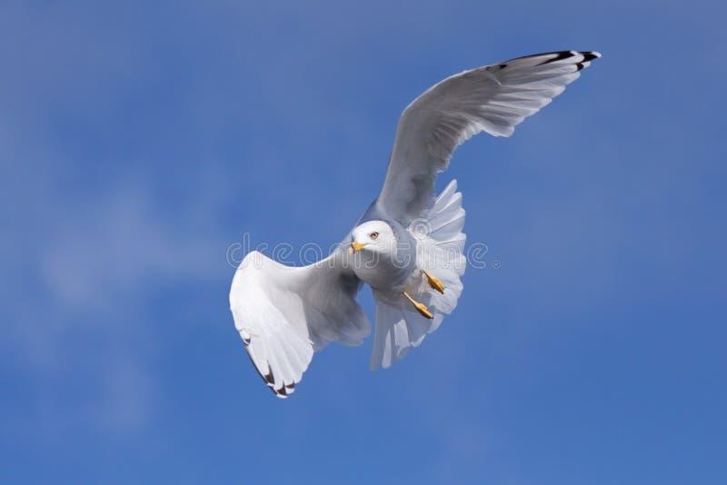 Ολίσθηση των ρευμάτων αέρα στοκ φωτογραφία με δικαίωμα ελεύθερης χρήσης