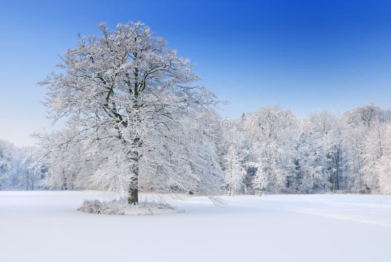 ολλανδικός χειμώνας τοπί στοκ εικόνες με δικαίωμα ελεύθερης χρήσης