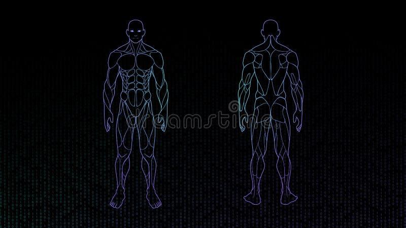 Ολόγραμμα νέου ανατομίας ανθρώπινων σωμάτων μορφής περιγράμματος που προβάλλεται στο μαύρο υπόβαθρο, sci στοιχείο σχεδίου διεπαφώ διανυσματική απεικόνιση