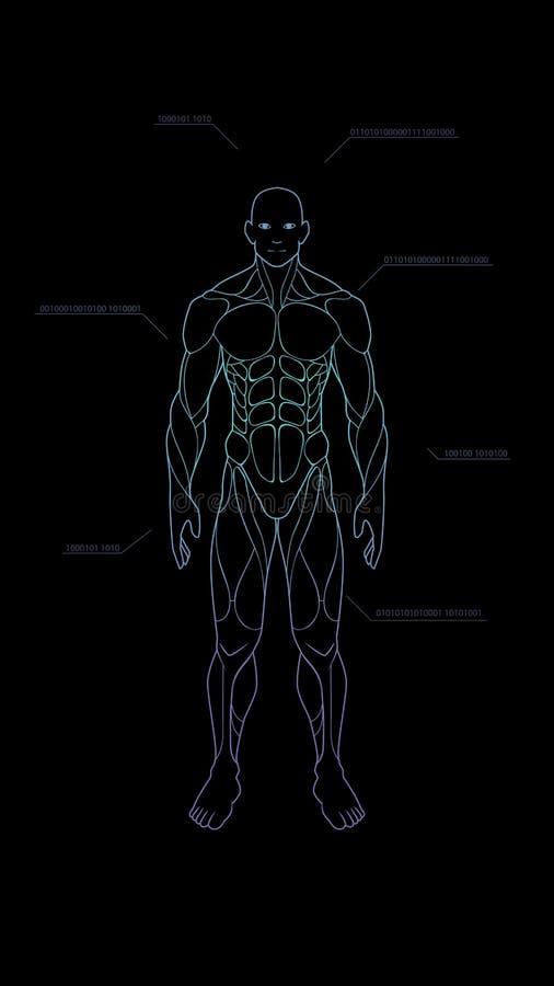Ολόγραμμα νέου ανατομίας ανθρώπινων σωμάτων μορφής περιγράμματος που προβάλλεται στο μαύρο υπόβαθρο, sci στοιχείο σχεδίου διεπαφώ ελεύθερη απεικόνιση δικαιώματος