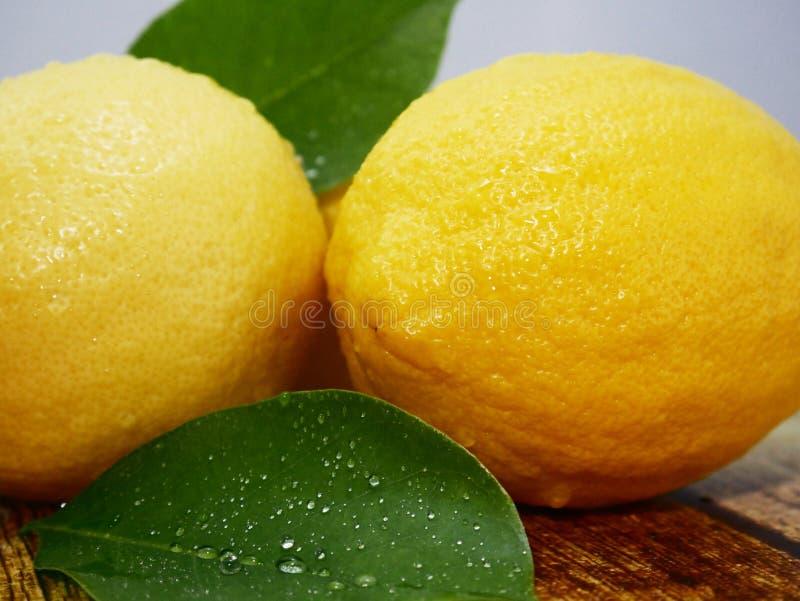 Ολόκληρα λεμόνια και φύλλο Εικόνα φρούτων στοκ εικόνες