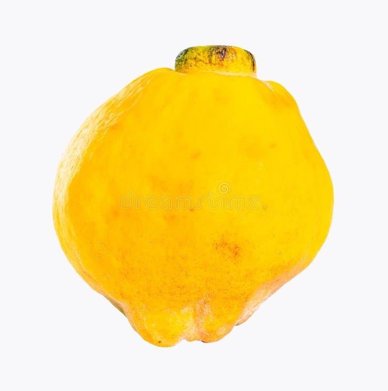 Ολόκληρα ώριμα κίτρινα φρούτα κυδωνιών που απομονώνονται στο λευκό στοκ εικόνα με δικαίωμα ελεύθερης χρήσης