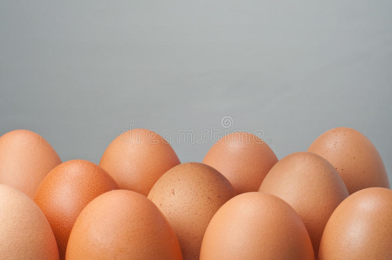 ομάδα αυγών στοκ εικόνες