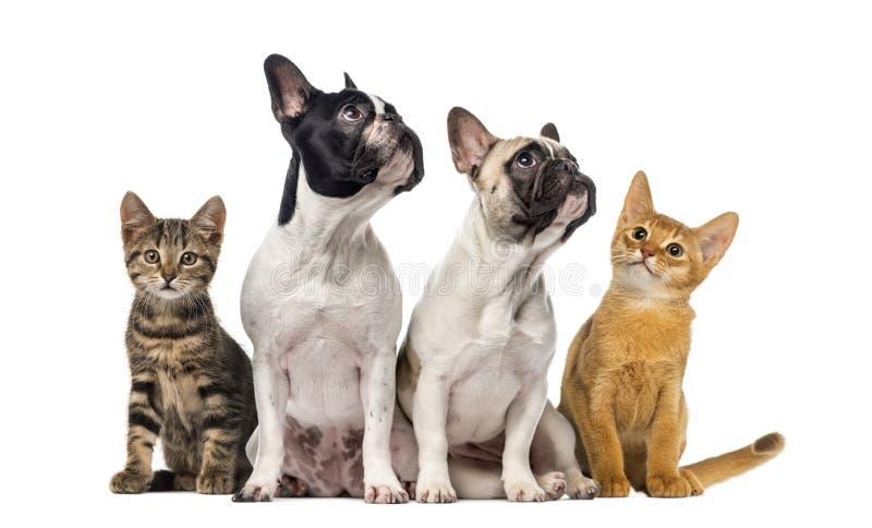Ομάδα γατών και σκυλιών που κάθεται, που απομονώνεται στοκ εικόνα με δικαίωμα ελεύθερης χρήσης