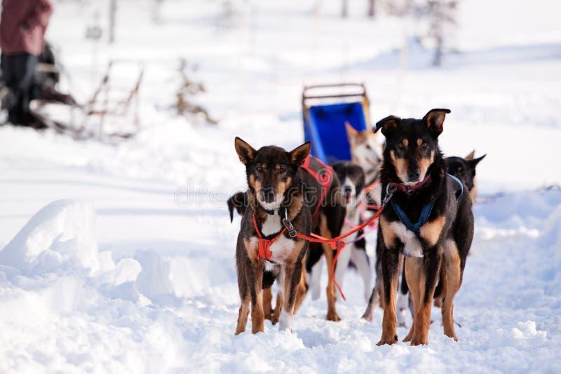 ομάδα ελκήθρων σκυλιών στοκ φωτογραφίες