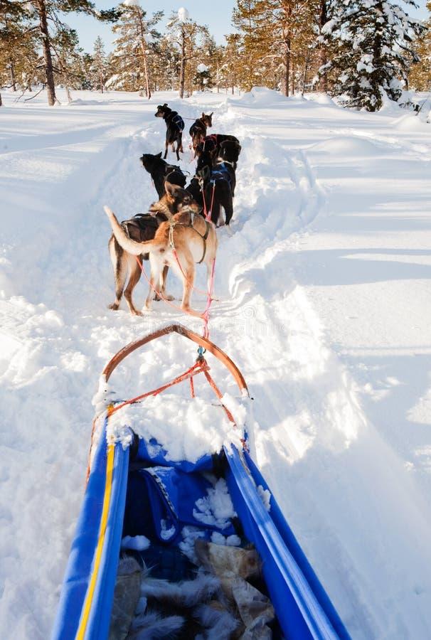 ομάδα ελκήθρων σκυλιών στοκ φωτογραφία με δικαίωμα ελεύθερης χρήσης