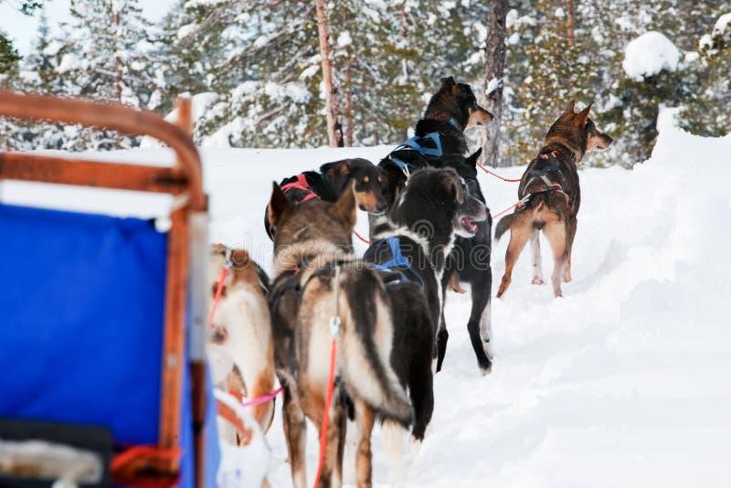 ομάδα ελκήθρων σκυλιών στοκ εικόνες