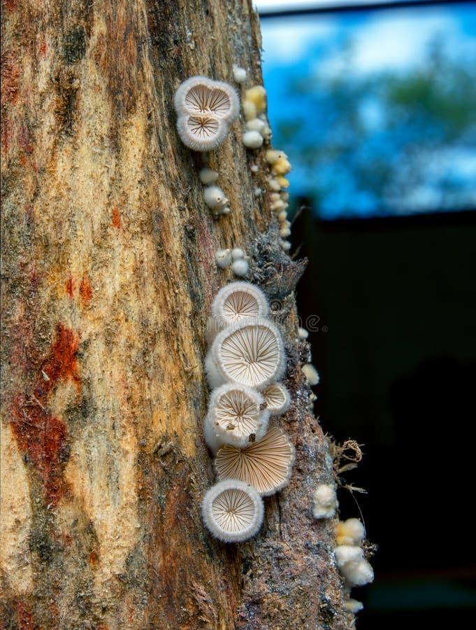 Ομάδα μικροσκοπικών στρογγυλών μανιταριών στοκ φωτογραφία