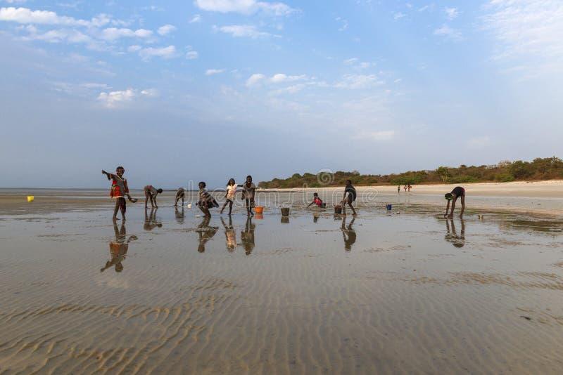 Ομάδα παιδιών που συλλέγουν cockles και που παίζουν στην παραλία στο νησί Orango στο ηλιοβασίλεμα στοκ εικόνες
