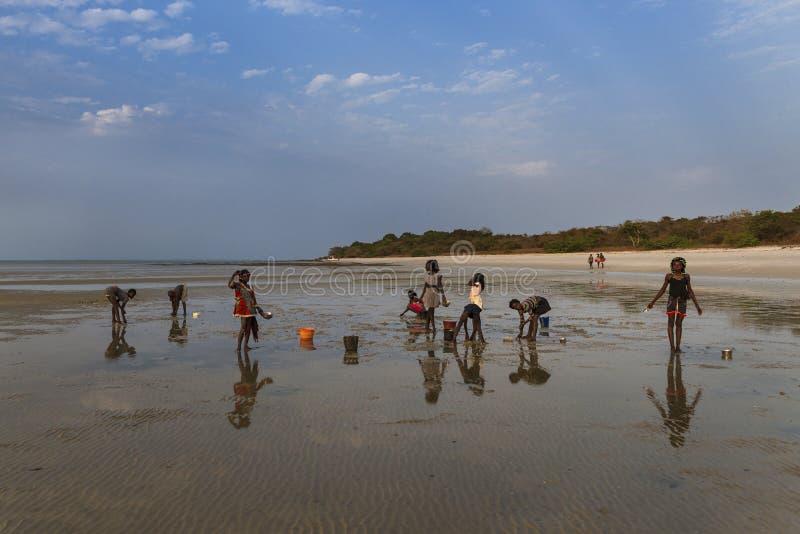 Ομάδα παιδιών που συλλέγουν cockles στην παραλία στο νησί Orango στο ηλιοβασίλεμα στοκ φωτογραφία