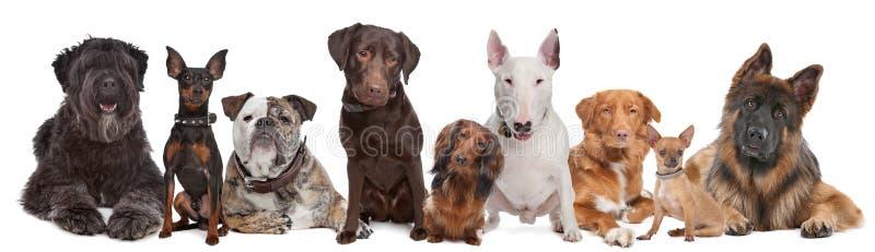 ομάδα σκυλιών στοκ εικόνες με δικαίωμα ελεύθερης χρήσης