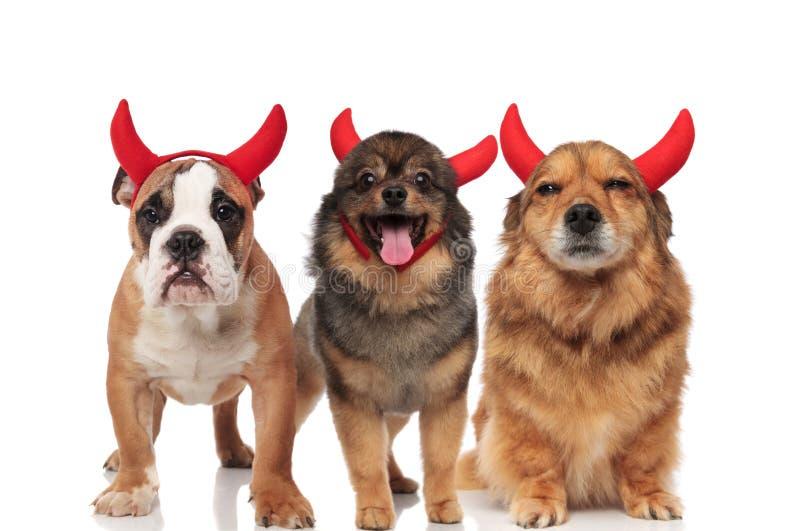 Ομάδα τριών λατρευτών σκυλιών διαβόλων που στέκονται και που κάθονται στοκ εικόνες