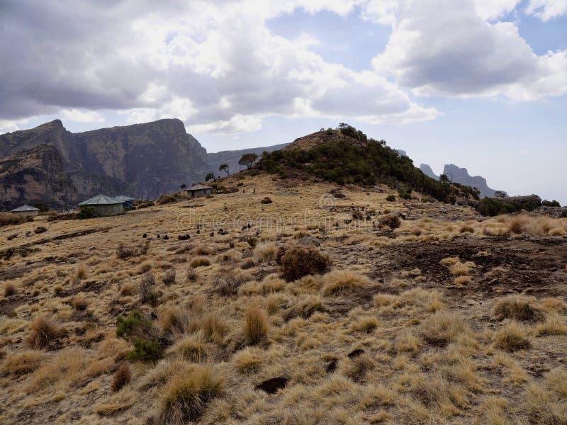 Ομάδα Gelada, gelada Theropithecus, τροφές στο εθνικό πάρκο βουνών Simien στην Αιθιοπία στοκ φωτογραφίες με δικαίωμα ελεύθερης χρήσης