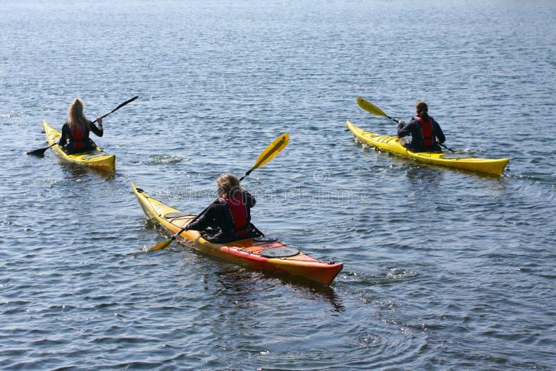 Ομάδα kayaker που κωπηλατεί στο καγιάκ από την κωπηλασία της θάλασσας, τον ενεργό αθλητισμό νερού και τον ελεύθερο χρόνο, στοκ εικόνα