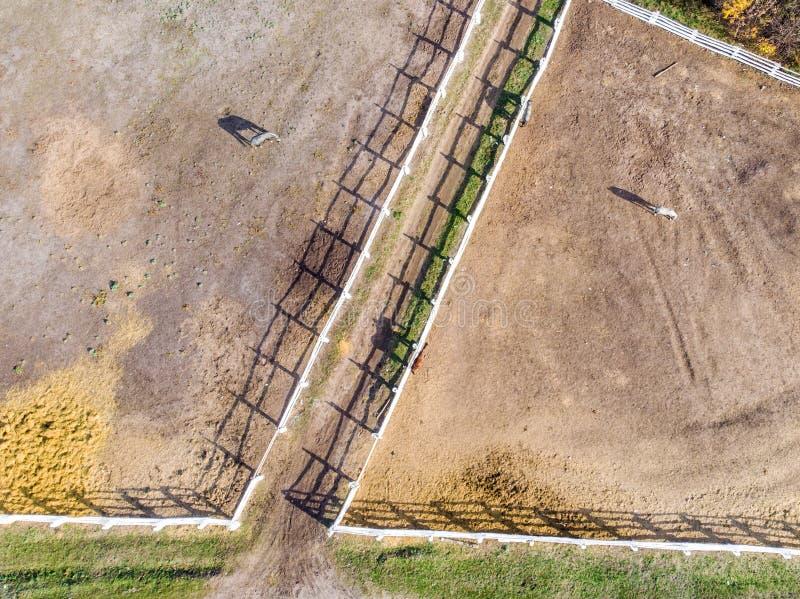 Ομάδα thoroughbred αλόγων που περπατούν και που βόσκουν στη μάντρα κοντά στο σταύλο Μακριά σκιά απογεύματος βραδιού Όμορφα ζώα στ στοκ εικόνες με δικαίωμα ελεύθερης χρήσης
