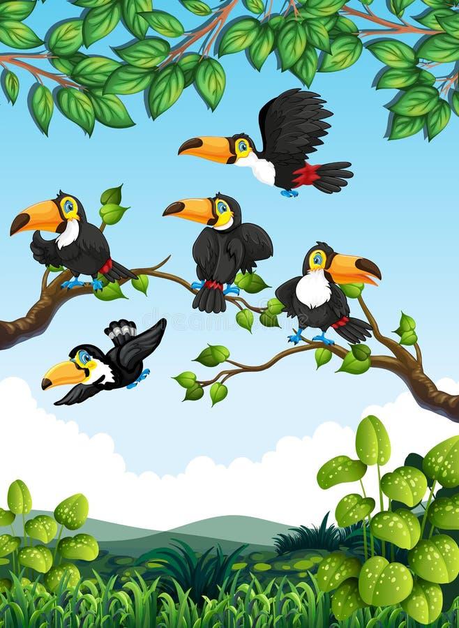 Ομάδα toucan στη φύση απεικόνιση αποθεμάτων
