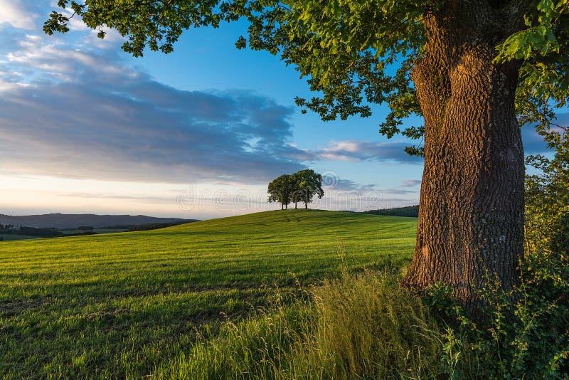Ομάδα δέντρων σε έναν λόφο στοκ εικόνες