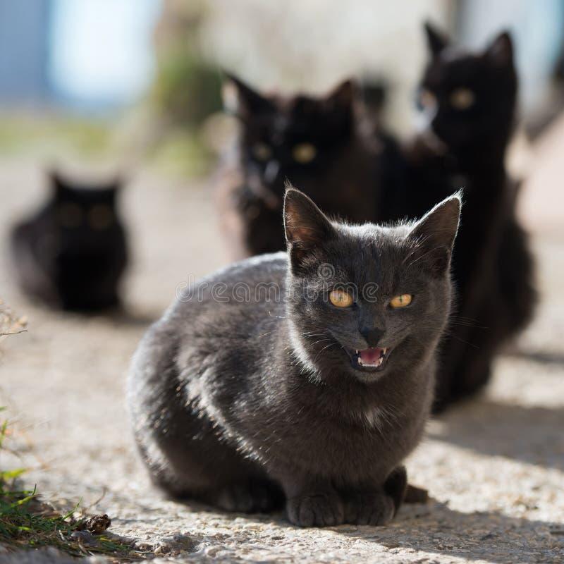 Ομάδα γατών στοκ φωτογραφία με δικαίωμα ελεύθερης χρήσης