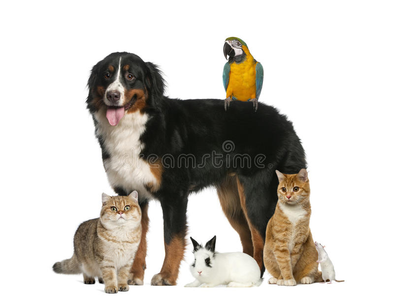 Ομάδα κατοικίδιων ζώων στοκ εικόνες