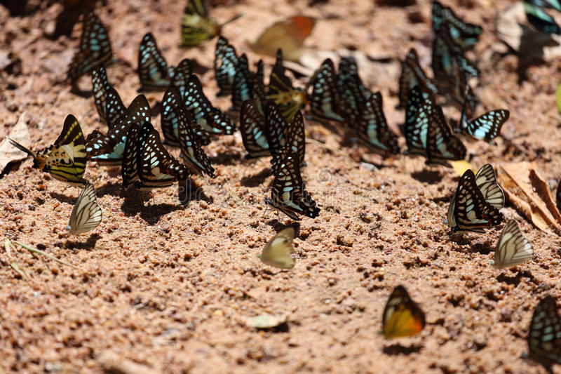 Ομάδα πεταλούδας στο έδαφος στοκ φωτογραφία με δικαίωμα ελεύθερης χρήσης