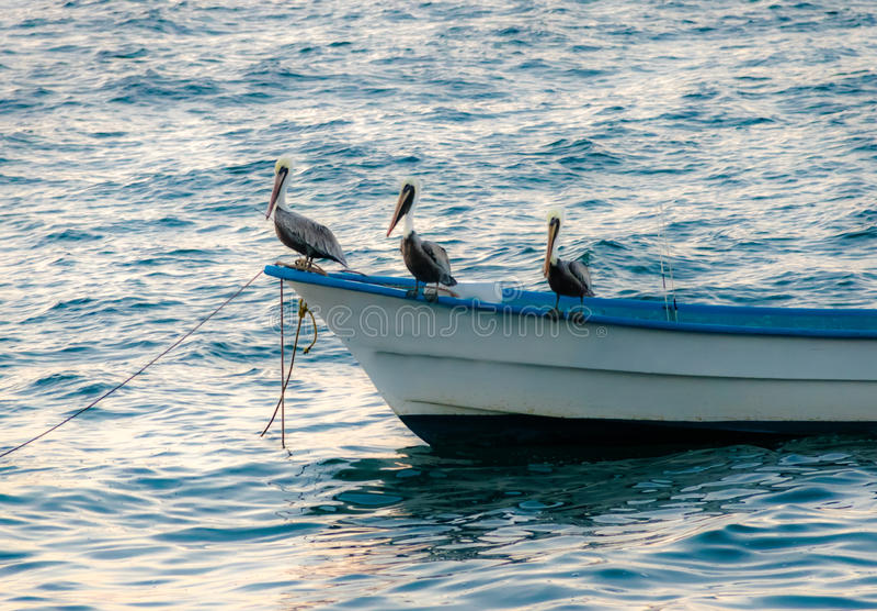 Ομάδα πελεκάνων που κάθεται σε μια βάρκα - Puerto Vallarta, Jalisco, Μεξικό στοκ φωτογραφία με δικαίωμα ελεύθερης χρήσης