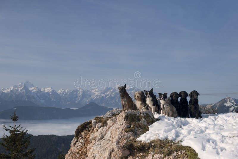Ομάδα σκυλιών που κάθεται πάνω από τα βουνά στοκ εικόνες με δικαίωμα ελεύθερης χρήσης