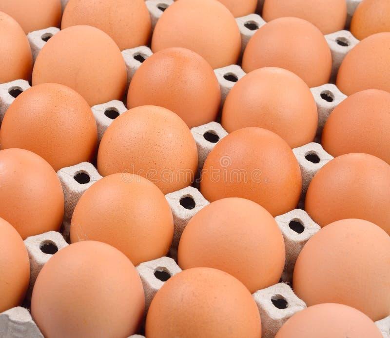 Ομάδα φρέσκων αυγών στο δίσκο εγγράφου στοκ φωτογραφία