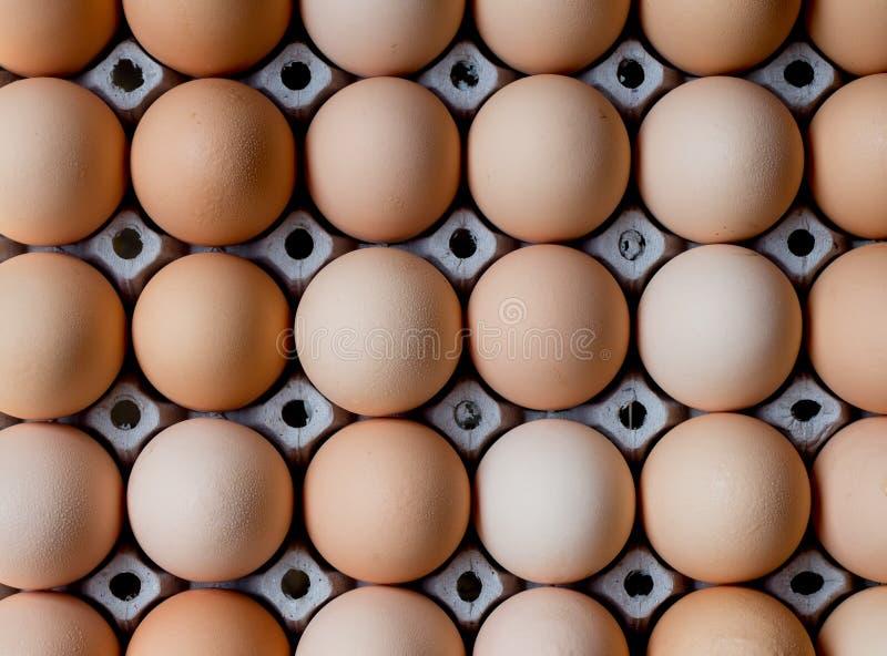 Ομάδα φρέσκων αυγών στο δίσκο εγγράφου στοκ εικόνες με δικαίωμα ελεύθερης χρήσης