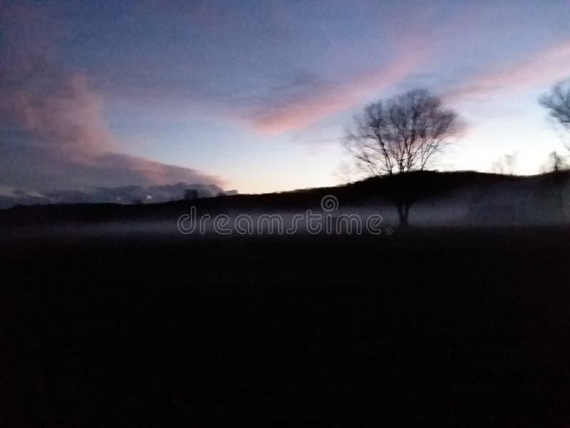 Ομίχλη, κοίλη, ξύλα, παλαιό αγρόκτημα, που συχνάζεται στοκ εικόνες με δικαίωμα ελεύθερης χρήσης