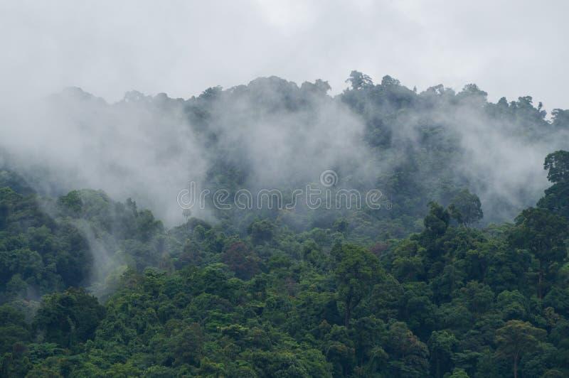 Ομίχλη που αυξάνεται από μια πολύβλαστη ζούγκλα στη Νοτιοανατολική Ασία μετά από μια δυνατή βροχή στοκ φωτογραφία