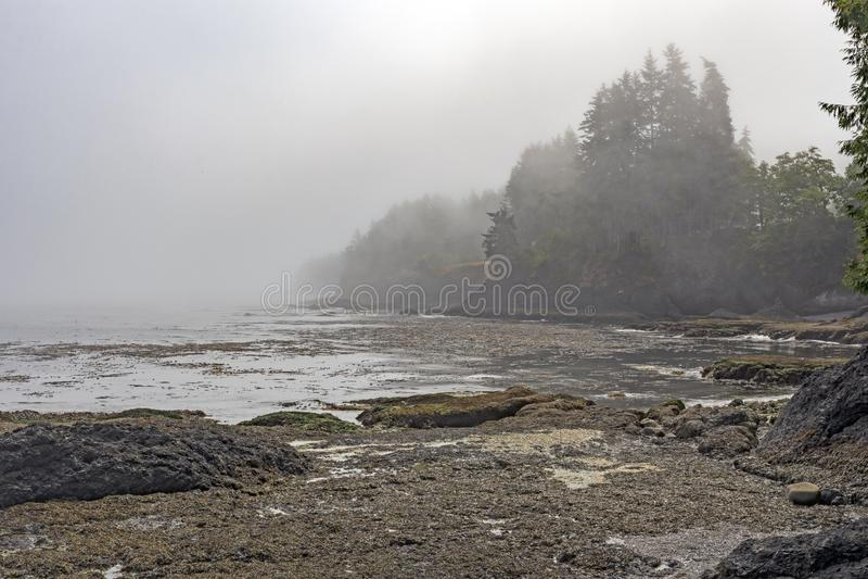 Ομίχλη πρωινού και χαμηλή παλίρροια στην ακτή στοκ εικόνα