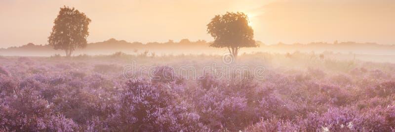 Ομίχλη πέρα από την ανθίζοντας ερείκη στις Κάτω Χώρες στοκ εικόνες