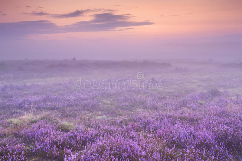 Ομίχλη πέρα από την ερείκη κοντά στο Χίλβερσουμ, οι Κάτω Χώρες στην αυγή στοκ φωτογραφία