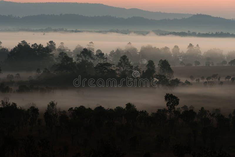 Ομίχλη που καλύπτει τα δάση βουνών στο πρωί στοκ φωτογραφία με δικαίωμα ελεύθερης χρήσης