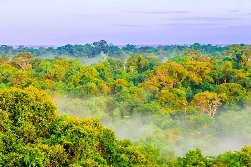 Ομίχλη πρωινού πέρα από το τροπικό δάσος στην Κολομβία στοκ φωτογραφίες