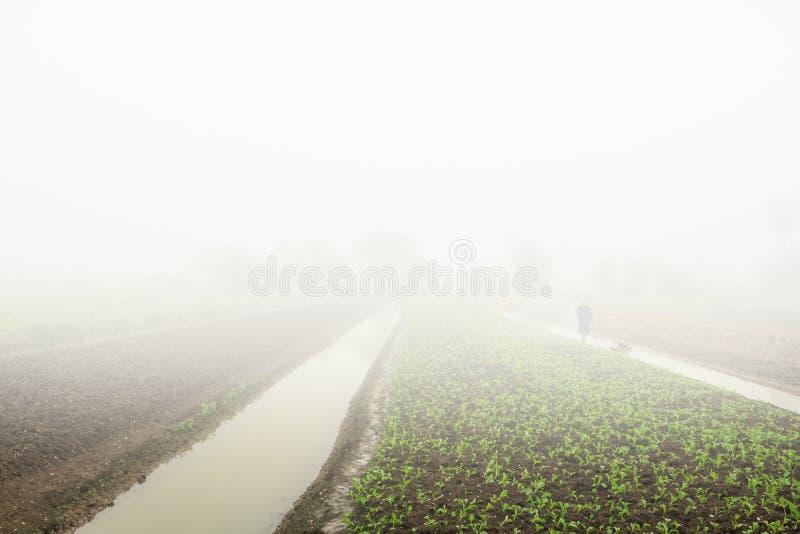 Ομίχλη πρωινού στους τομείς γεωργίας στοκ φωτογραφία