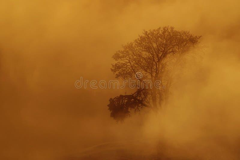 Ομίχλη χιονιού ηλιοβασιλέματος στοκ φωτογραφίες